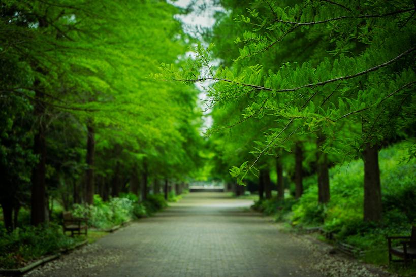 【Ochimusya Drive Tour 2】The filming location of Fullmetal Alchemist (Harima Central Park)
